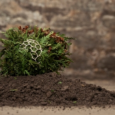 Within this form is a capsule containing seeds of the Thuja occidentalis. This capsule is held together with the branches of the arborvitae. As the plant material disintegrates from the capsule and structure, the seeds of the plant will fall and begin a new life.